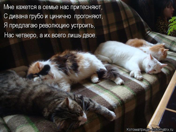 Котоматрица: Мне кажется в семье нас притесняют, С дивана грубо и цинично  прогоняют, Я предлагаю революцию устроить, Нас четверо, а их всего лишь двое.