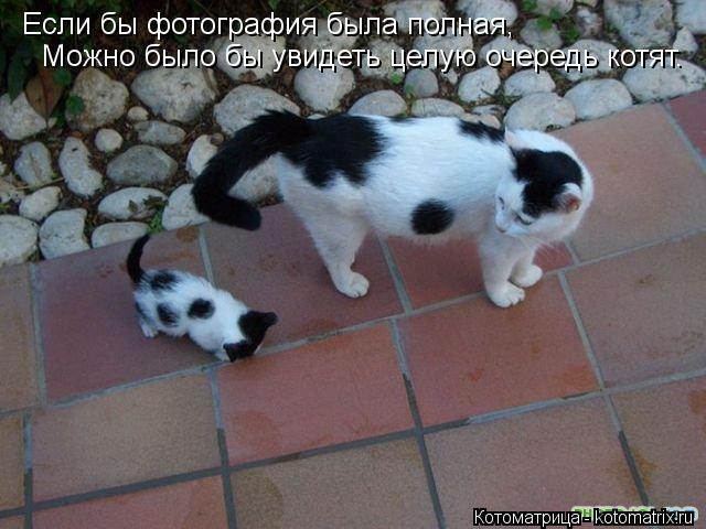 Котоматрица: Если бы фотография была полная, Можно было бы увидеть целую очередь котят.
