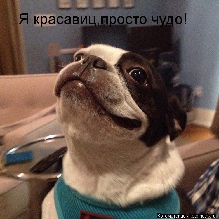 Котоматрица: Я красавиц,просто чудо!