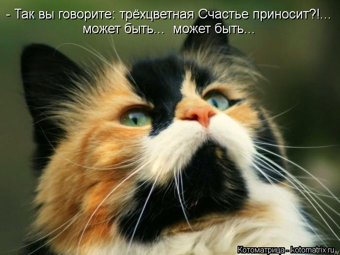 Котоматрица: - Так вы говорите: трёхцветная Счастье приносит?!... может быть...  может быть...