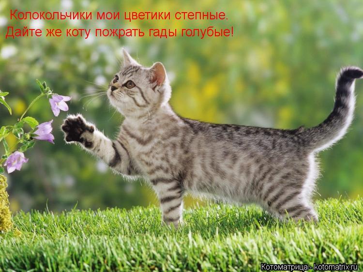 Котоматрица: Колокольчики мои цветики степные. Дайте же коту пожрать гады голубые!