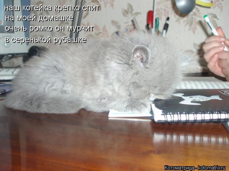 Котоматрица: наш котейка крепко спит на моей домашке очень ромко он мурчит в серенькой рубашке