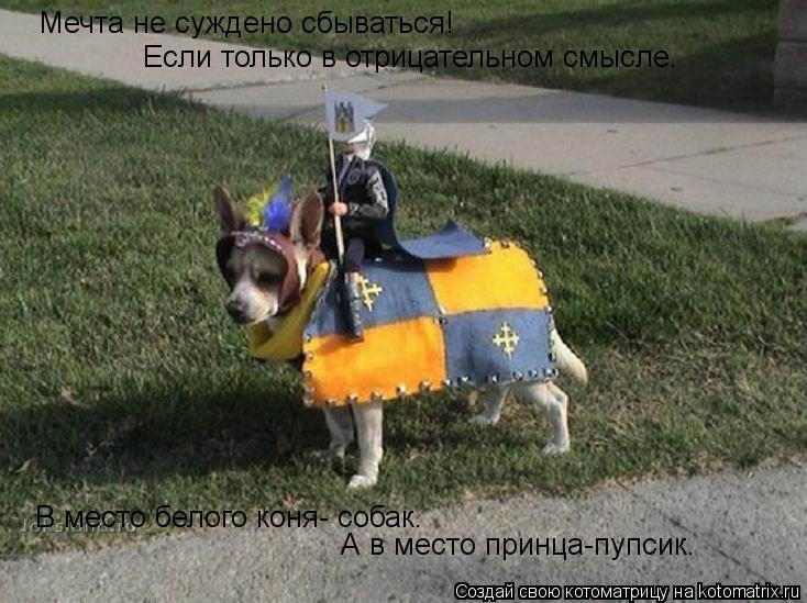 Котоматрица: Мечта не суждено сбываться! Если только в отрицательном смысле. В место белого коня- собак. А в место принца-пупсик.