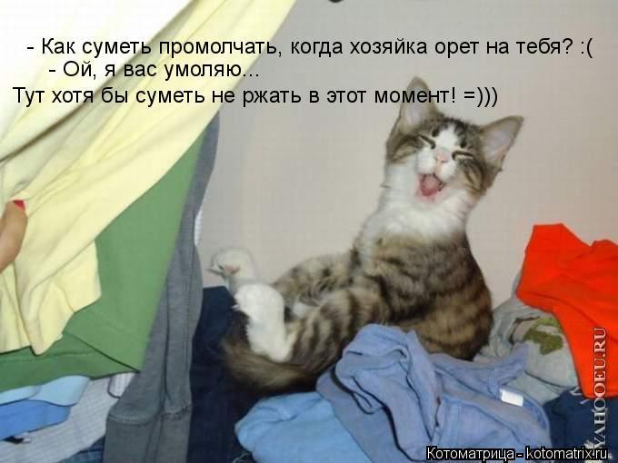 Котоматрица: - Как суметь промолчать, когда хозяйка орет на тебя? :(  - Ой, я вас умоляю...  Тут хотя бы суметь не ржать в этот момент! =)))