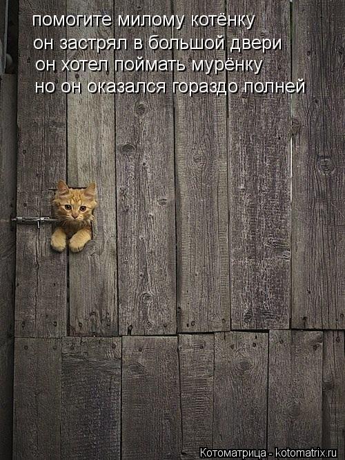 Котоматрица: помогите милому котёнку он застрял в большой двери он хотел поймать мурёнку но он оказался гораздо полней