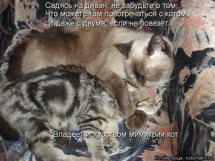 Котоматрица: Садясь на диван, не забудьте о том, Что можете там повстречаться с котом, И даже с двумя, если не повезёт... Владеет искусством мимикрии кот.