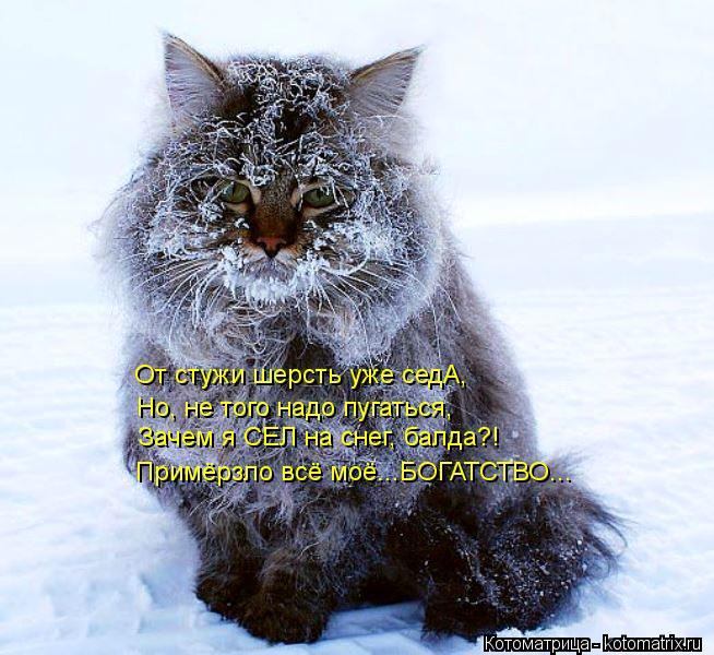 Котоматрица: Примёрзло всё моё...БОГАТСТВО... Зачем я СЕЛ на снег, балда?! От стужи шерсть уже седА, Но, не того надо пугаться,
