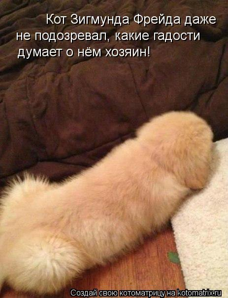 Котоматрица: Кот Зигмунда Фрейда даже  не подозревал, какие гадости  думает о нём хозяин!