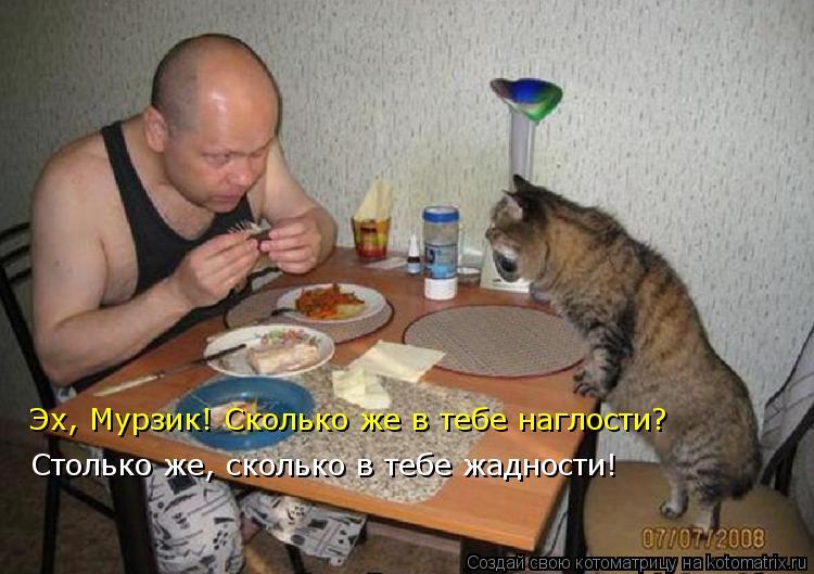 Котоматрица: Столько же, сколько в тебе жадности! Эх, Мурзик! Сколько же в тебе наглости?