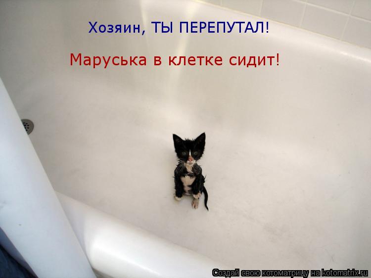 Котоматрица: Хозяин, ТЫ ПЕРЕПУТАЛ! Маруська в клетке сидит!