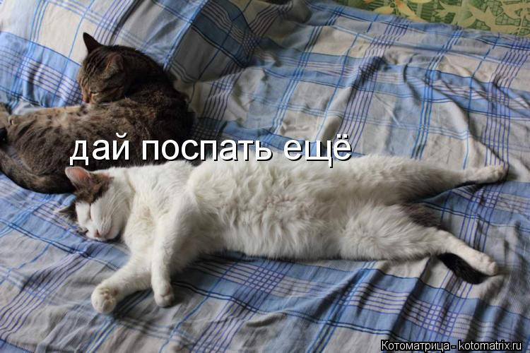Котоматрица: дай поспать ещё