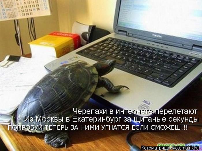 Котоматрица: Черепахи в интернете перелетают Из Москвы в Екатеринбург за щитаные секунды ПОПРОБУЙ ТЕПЕРЬ ЗА НИМИ УГНАТСЯ ЕСЛИ СМОЖЕШ!!!