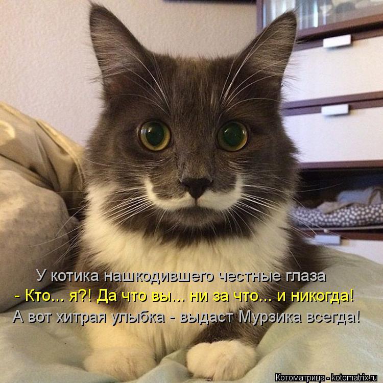 Котоматрица: У котика нашкодившего честные глаза - Кто... я?! Да что вы... ни за что... и никогда! А вот хитрая улыбка - выдаст Мурзика всегда!