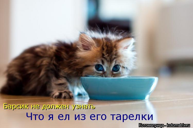 Котоматрица: Барсик не должен узнать Что я ел из его тарелки