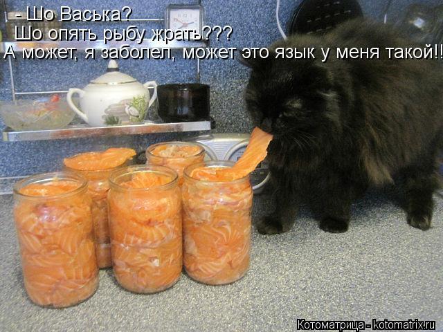 Котоматрица: - Шо Васька? Шо опять рыбу жрать??? А может, я заболел, может это язык у меня такой!!!