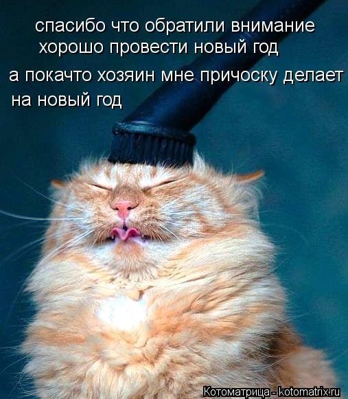 Котоматрица: спасибо что обратили внимание  хорошо провести новый год а покачто хозяин мне причоску делает на новый год на новый год
