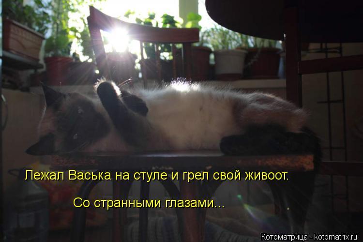Котоматрица: Лежал Васька на стуле и грел свой живоот.                                                                                                                                            Со странными глазами...