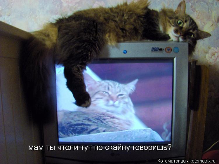 Котоматрица: мам ты чтоли тут по скайпу говоришь?