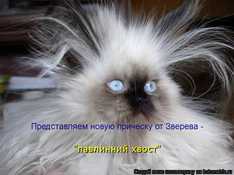 "Котоматрица: Представляем новую прическу от Зверева - ""павлинний хвост"""