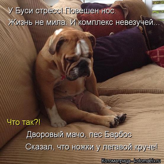 http://kotomatrix.ru/images/lolz/2013/12/13/kotomatritsa_c.jpg