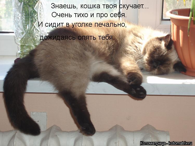 Котоматрица: Знаешь, кошка твоя скучает...  Очень тихо и про себя. И сидит в уголке печально, дожидаясь опять тебя.
