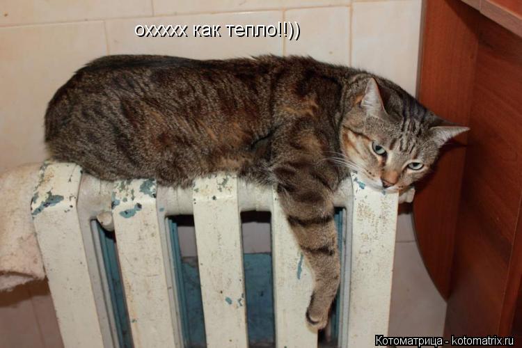 Котоматрица: оххххх как тепло!!))