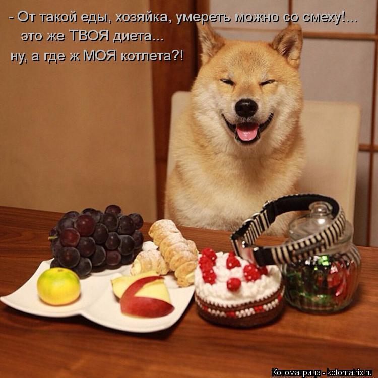 Котоматрица: - От такой еды, хозяйка, умереть можно со смеху!... это же ТВОЯ диета... ну, а где ж МОЯ котлета?!