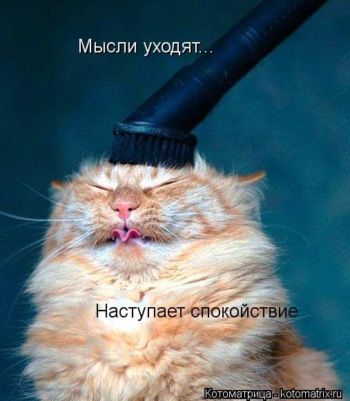 http://kotomatrix.ru/images/lolz/2013/12/13/kotomatritsa_os.jpg