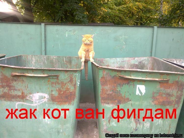 Котоматрица: жак кот ван фигдам