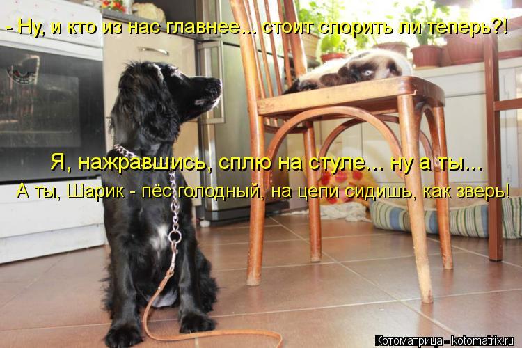 Котоматрица: - Ну, и кто из нас главнее... стоит спорить ли теперь?! Я, нажравшись, сплю на стуле... ну а ты... А ты, Шарик - пёс голодный, на цепи сидишь, как звер