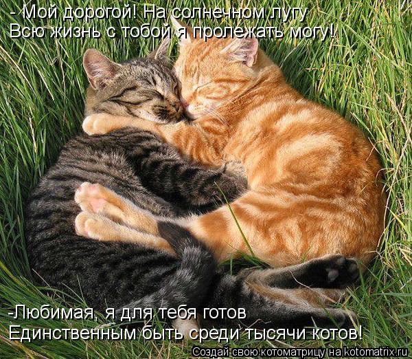 Котоматрица: - Мой дорогой! На солнечном лугу Всю жизнь с тобой я пролежать могу! -Любимая, я для тебя готов Единственным быть среди тысячи котов!