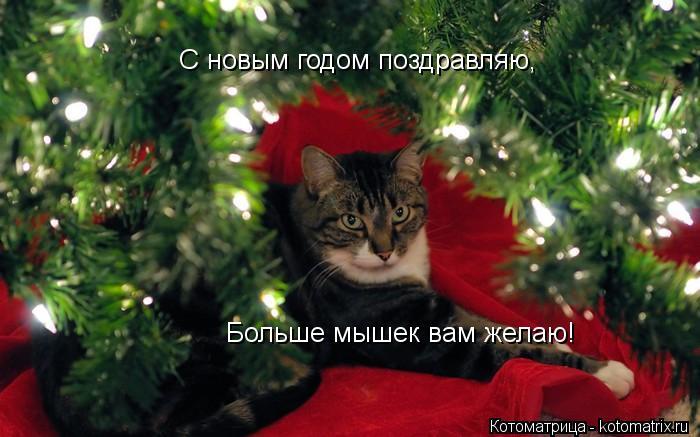 Котоматрица: Больше мышек вам желаю! С новым годом поздравляю,