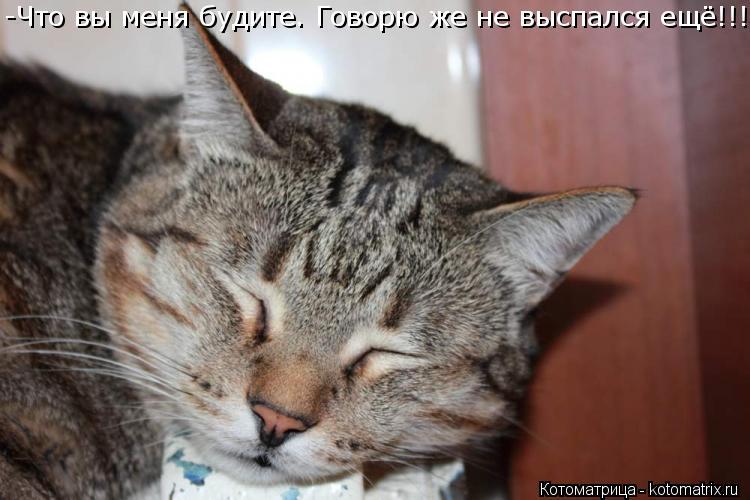 Котоматрица: -Что вы меня будите. Говорю же не выспался ещё!!!