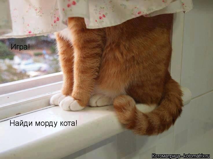 Котоматрица: Игра! Найди морду кота!