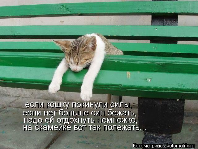 Котоматрица: если кошку покинули силы, если нет больше сил бежать, надо ей отдохнуть немножко, на скамейке вот так полежать...