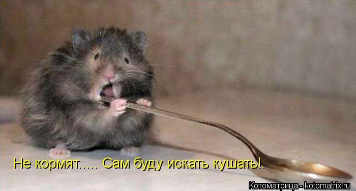 Котоматрица: Не кормят..... Сам буду искать кушать!.