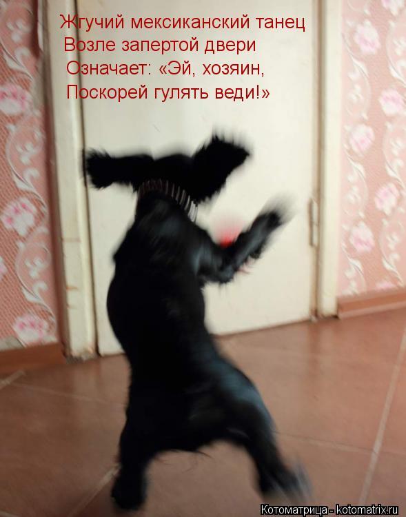 Котоматрица: Жгучий мексиканский танец Возле запертой двери Означает: «Эй, хозяин, Поскорей гулять веди!»