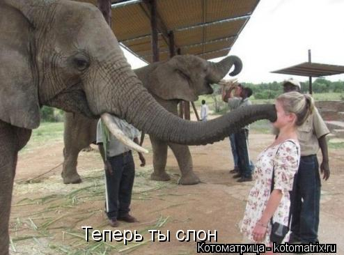 Котоматрица: Теперь ты слон