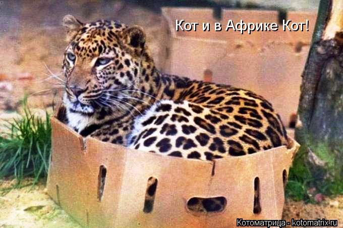 Котоматрица: Кот и в Африке Кот!