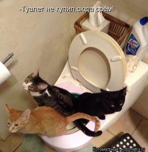 Котоматрица: -Туалет не купил,сюда срём!