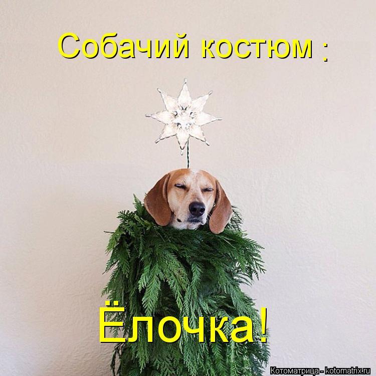 Котоматрица: Собачий костюм : Ёлочка!