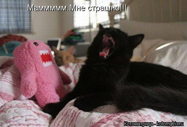 Котоматрица: Маммммм.Мне страшно!!!