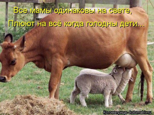 Котоматрица: Все мамы одинаковы на свете, Плюют на всё когда голодны дети...