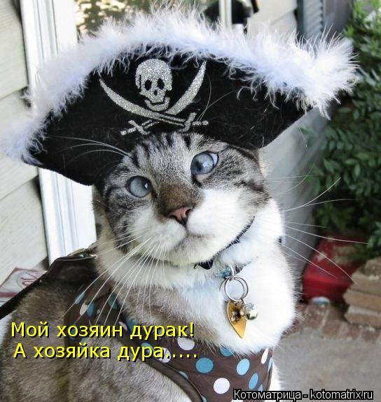 Котоматрица: Мой хозяин дурак! А хозяйка дура.....