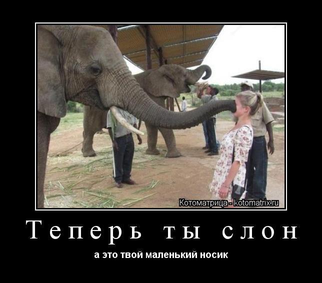 Котоматрица: Теперь ты слон а это твой маленький носик