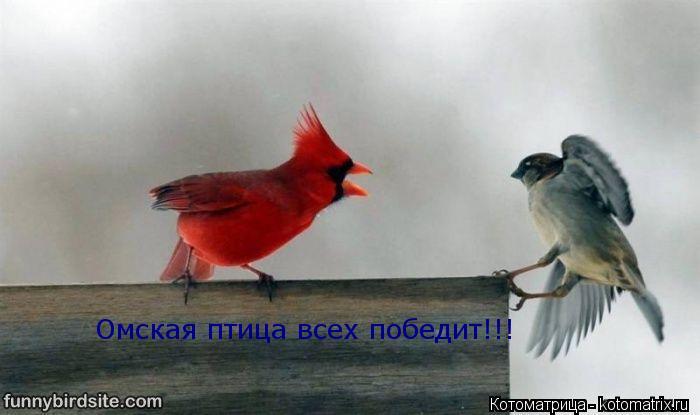 Котоматрица: Омская птица всех победит!!!