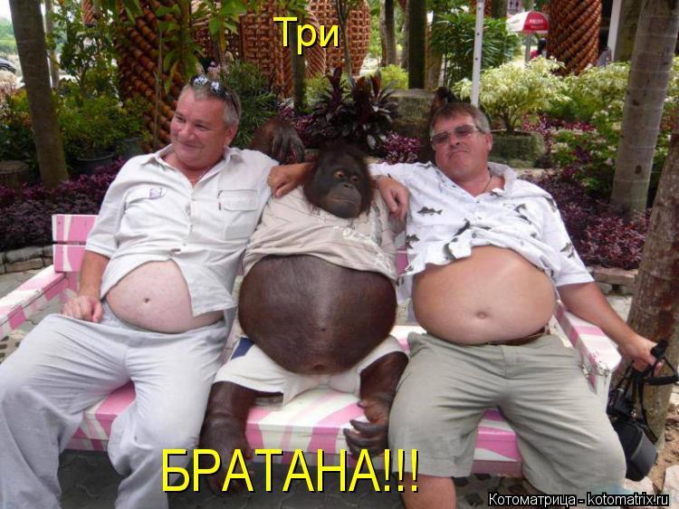 Котоматрица: Три  БРАТАНА!!!