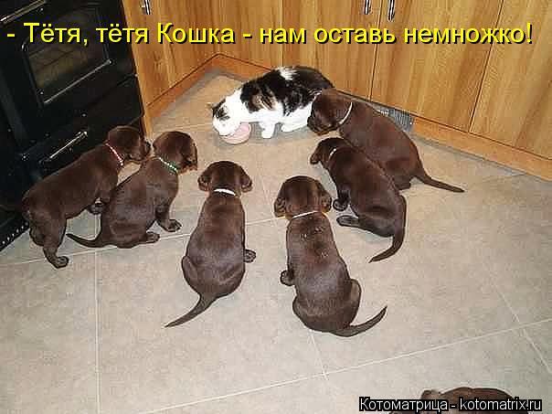 Котоматрица: - Тётя, тётя Кошка - нам оставь немножко!