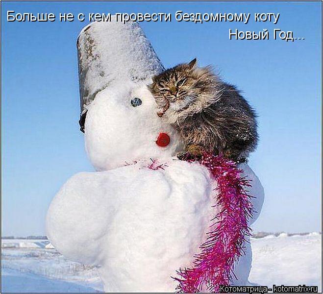 Котоматрица: Больше не с кем провести бездомному коту Новый Год...