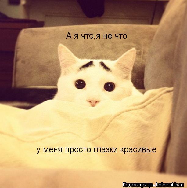 Котоматрица: А я что,я не что у меня просто глазки красивые